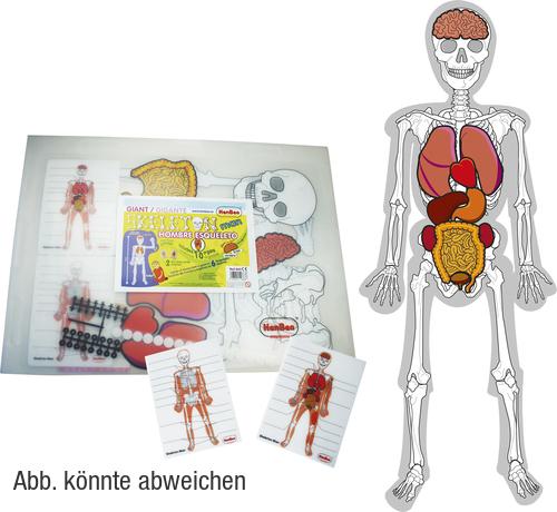 Menschliches Skelett - Anatomie und Ernährung